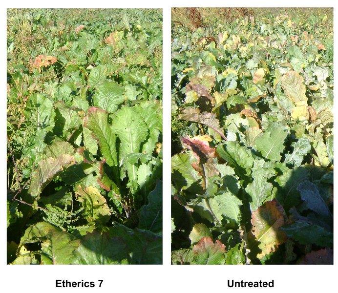 /images/0000/0077/turnips_fields_2011.jpg
