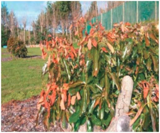 Unsprayed plant